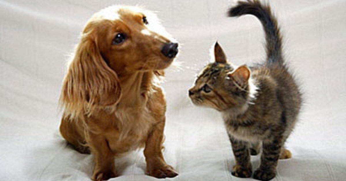 ペットが夢に出てくるのは愛情の象徴! ペットとの絆…